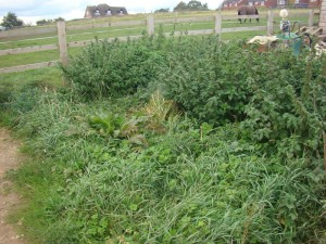 starting a new allotment covered in weeds