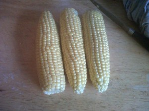 How to grow sweetcorn picture