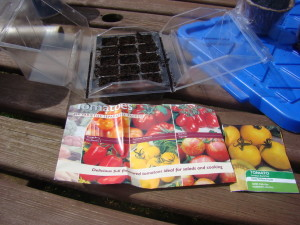 Growing tomatoes from seed 1
