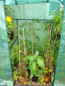 Plastic greenhouse open image