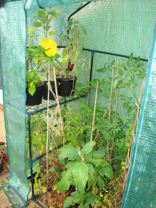 Plants in Plastic Greenhouse picture