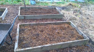 manured raised beds