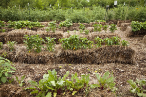 straw bale gardening image