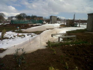 allotment in the snow