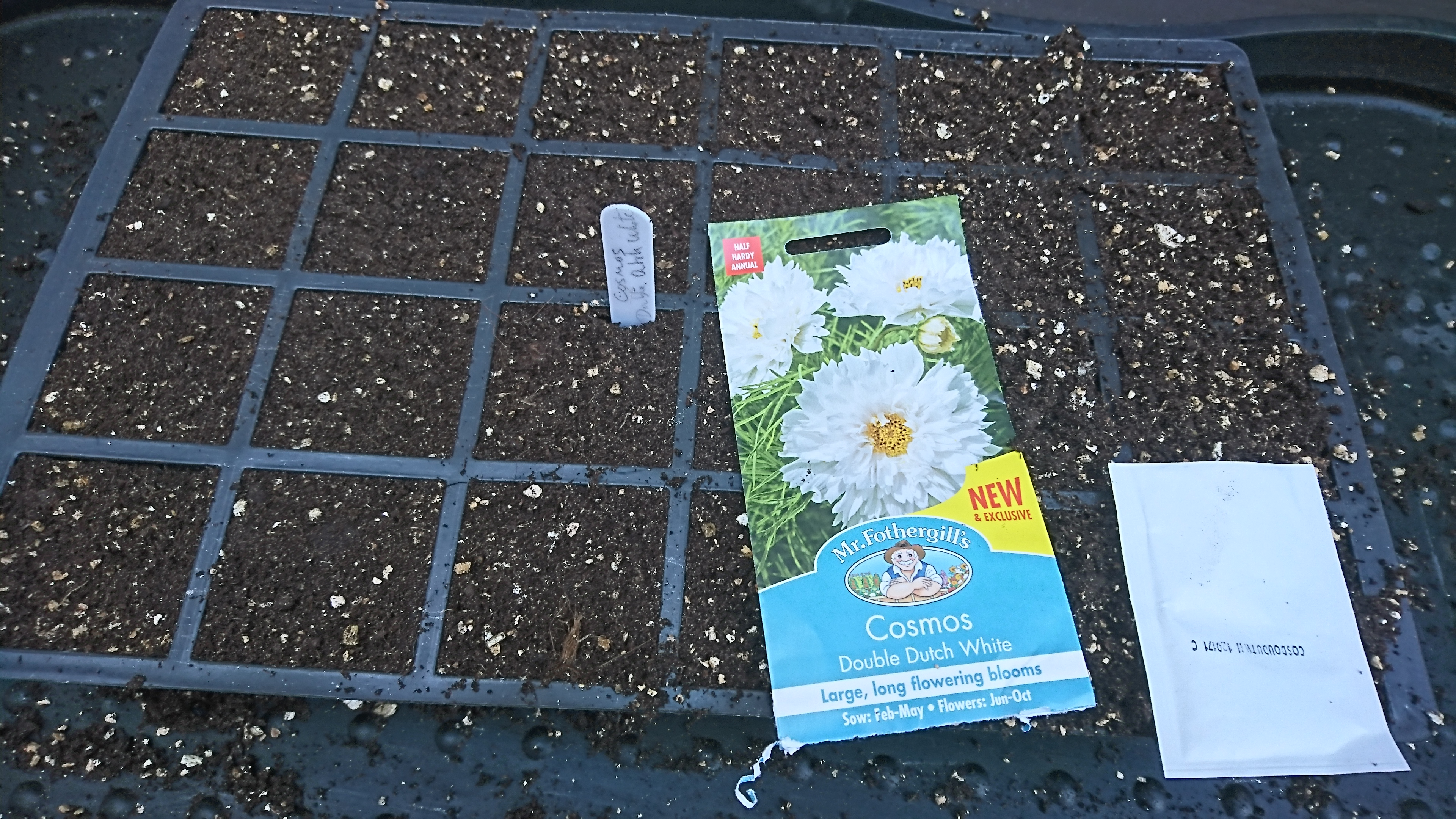 Mr Fothergill's Seed Trial – Cosmos – Double Dutch White