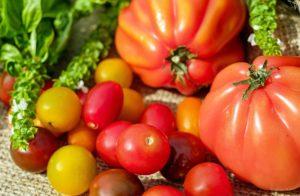 tomatoes-1586981_1920