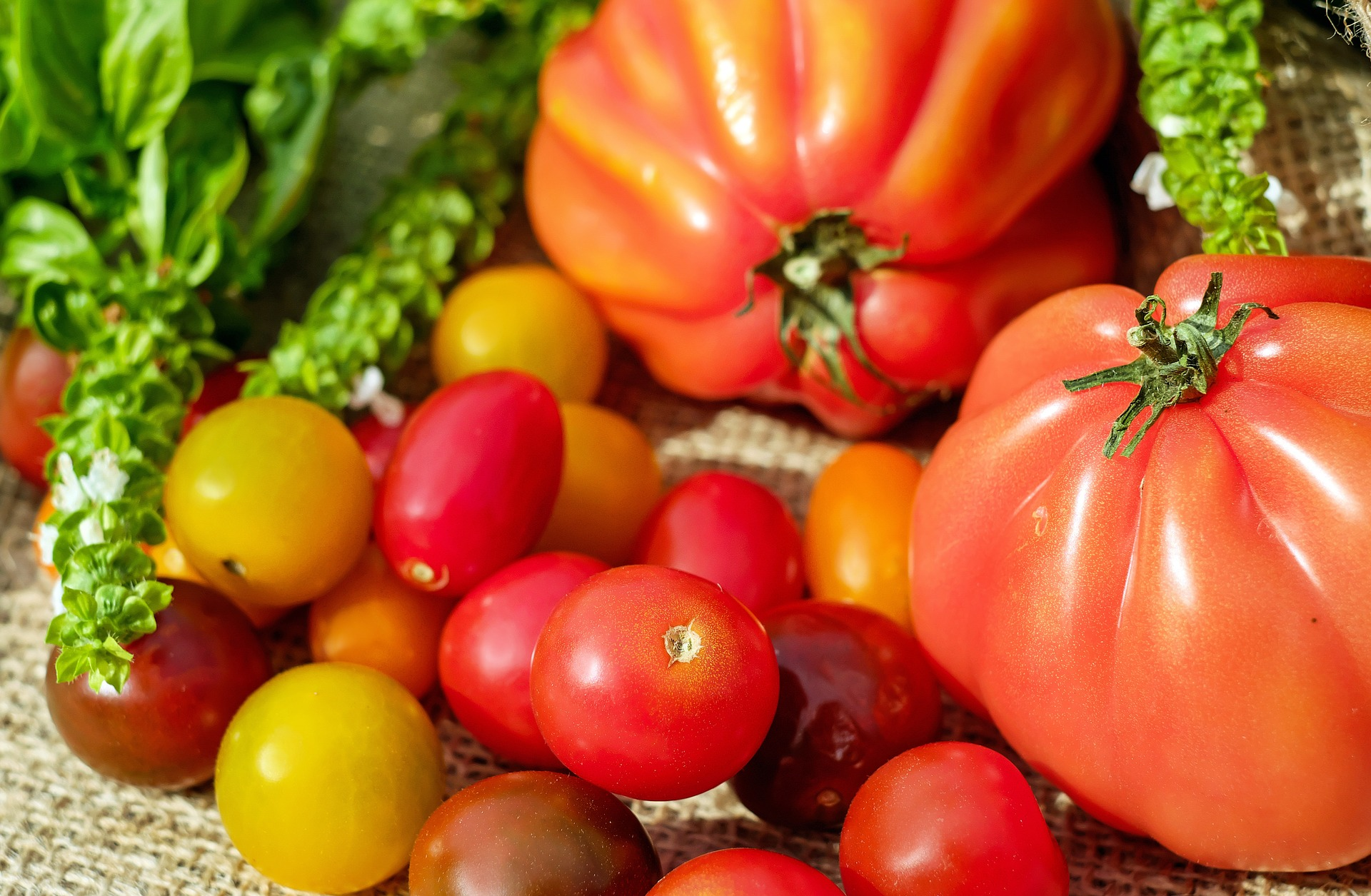 Growing Tomatoes – Which Varieties To Grow?