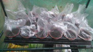 Tomato Seeds Mini Greenhouse Picture
